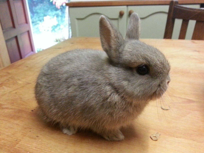 Galer a de im genes conejos enanos - Casas para conejos enanos ...