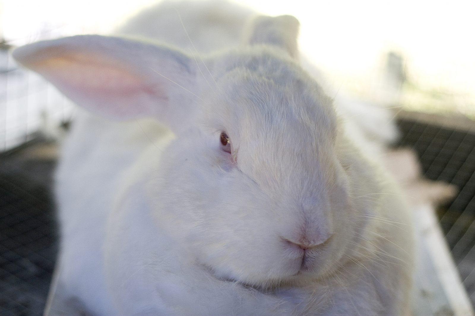 Increíble Libro De Colores De Conejos Blancos Componente - Dibujos ...